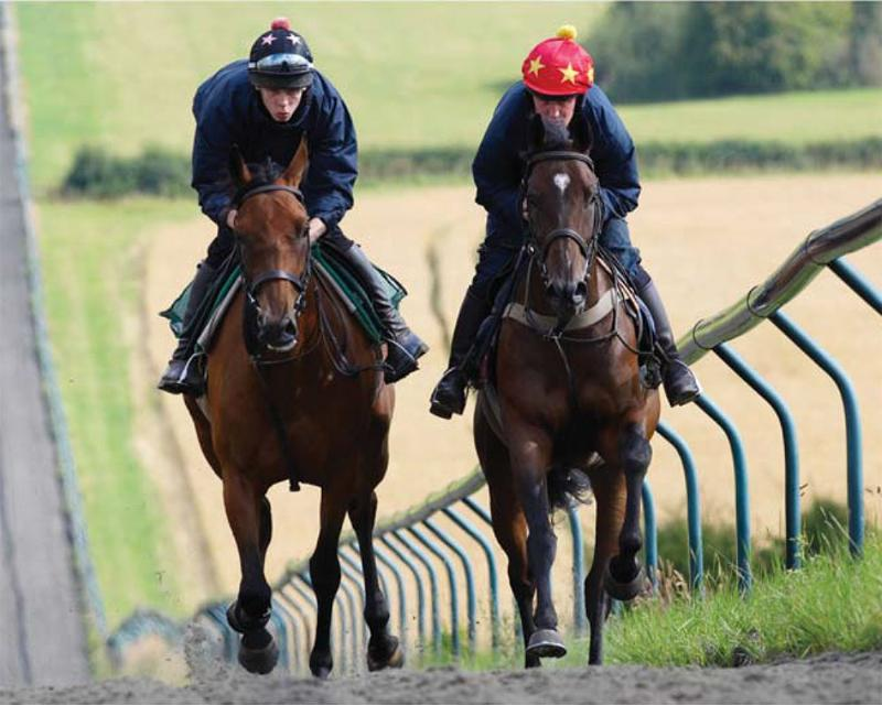 Work Morning On The Gallops