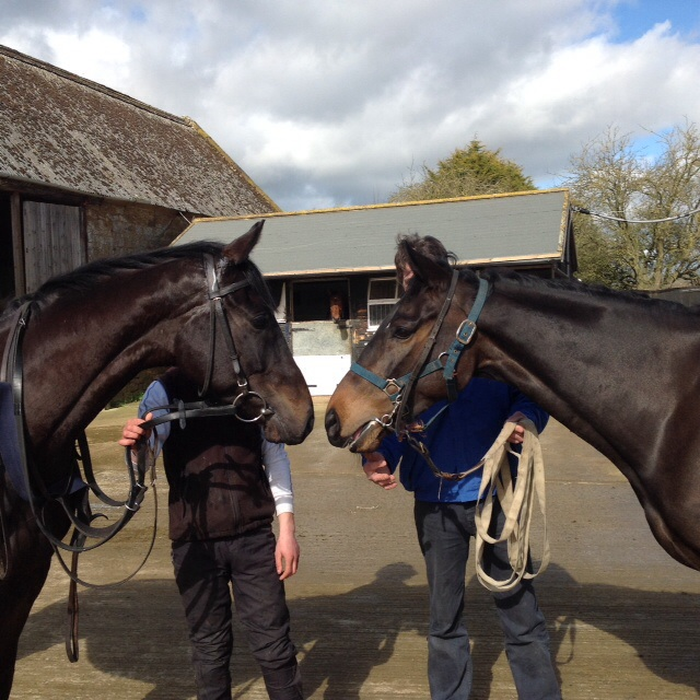 Royal Supreme meets Minellaforleisure