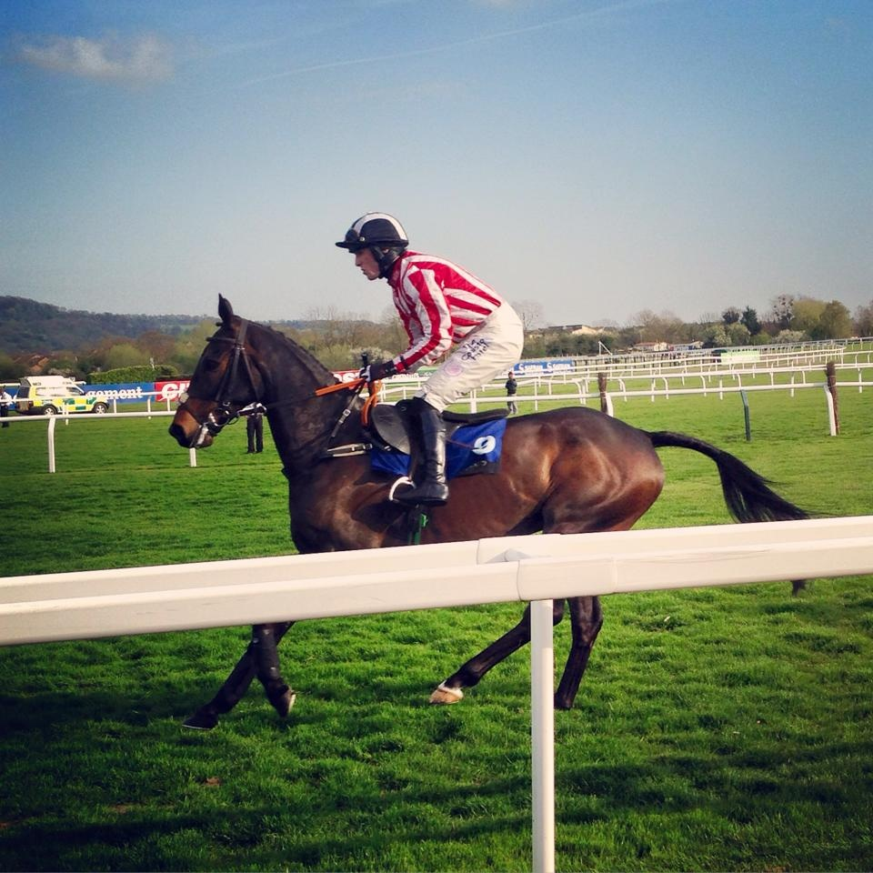 Minella at Cheltenham